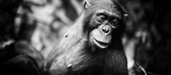 L'évolution est-elle une religion ?