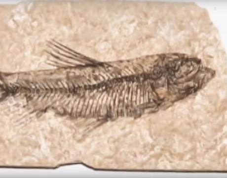 Fossilisation rapide des dinosaures